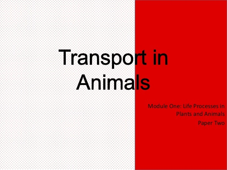 Module One: Life Processes in         Plants and Animals                   Paper Two