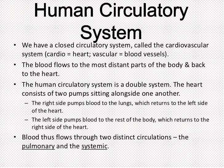 essay questions on cardiovascular system Cardiologists help victims of heart disease return to a full and useful life and also  counsel  you may need additional tests such as an ecg, x-ray, or blood test.