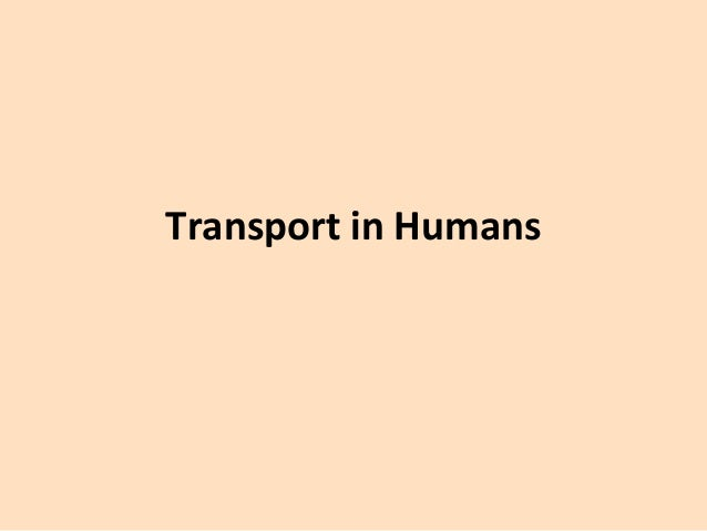 Transport in Humans
