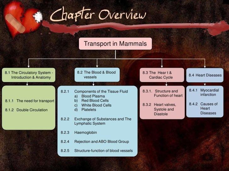 transport in mammals