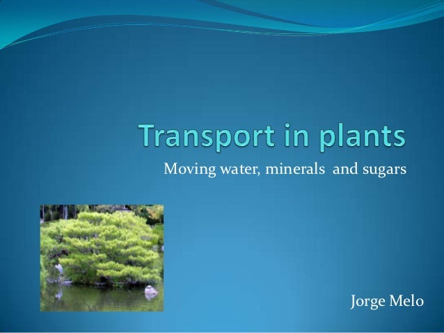 Moving water, minerals and sugars                         Jorge Melo