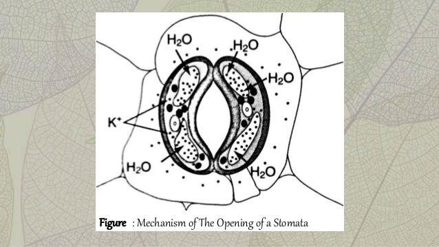 Biology Form 5 chapter 1 7 & 1 8 (Transport in Plants)
