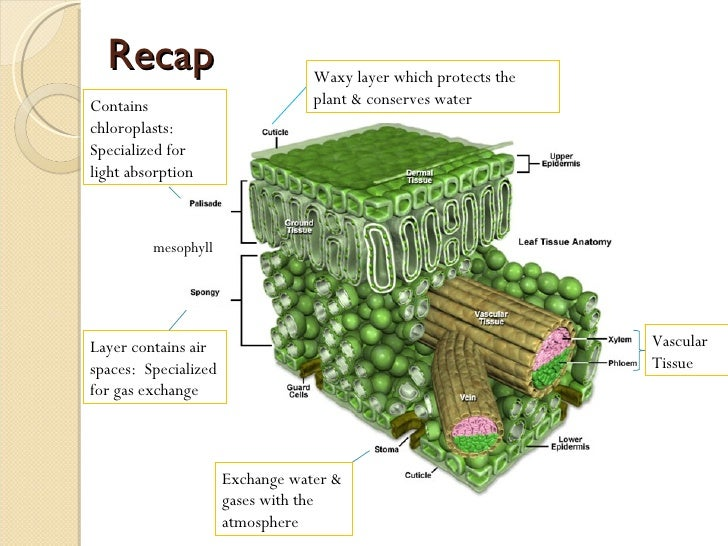 transport in plants Transport systems in plants [back to top] plants don't have a circulatory system like animals, but they do have a sophisticated transport system for carrying water and dissolved solutes to different parts of the plant, often over large distances.