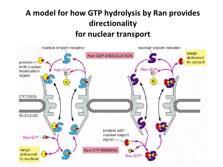 Transport Of Proteins
