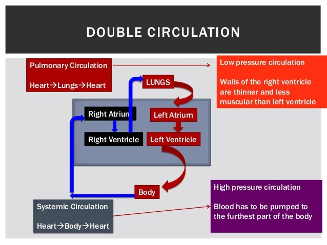 Transport system in humans blood passes the heart twicewhy double circulation ccuart Image collections