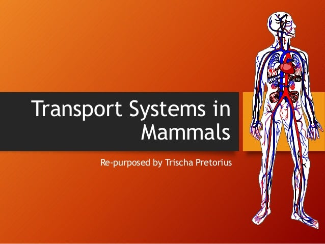 transport in mammals Organisms do not always require transport systems, and most have much simpler ones than us - so why the complexity in the mammalian transport system the reason is our size because mammals are so large (increased distance from the nutrients and the cells requiring them), have a high metabolic rate and a high level.