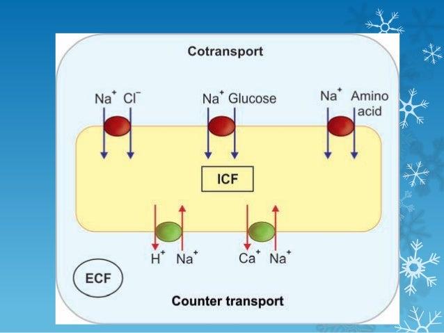 Transport Through Plasma Membrane