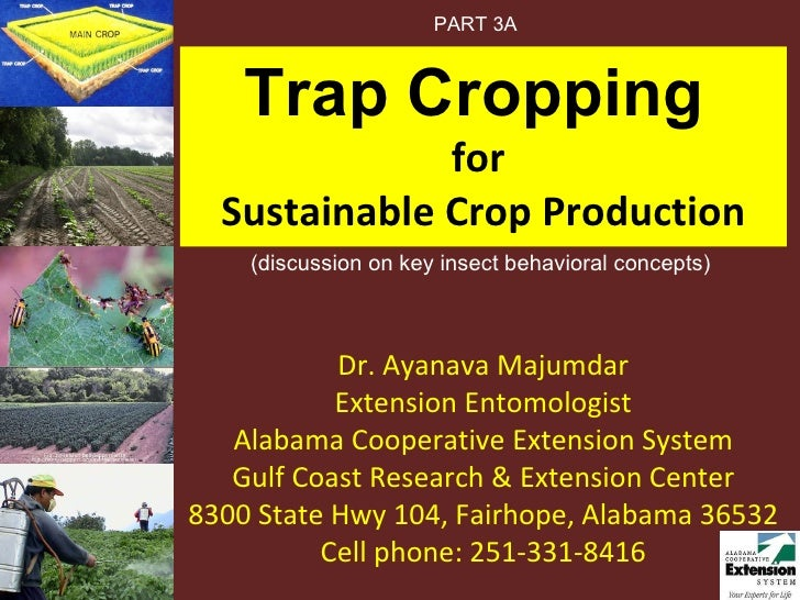 Trap Cropping  for  Sustainable Crop Production Dr. Ayanava Majumdar Extension Entomologist Alabama Cooperative Extension ...