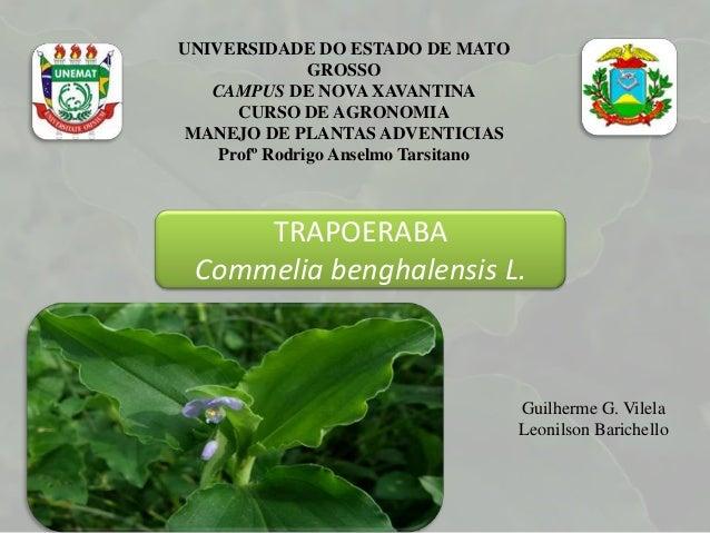 UNIVERSIDADE DO ESTADO DE MATOGROSSOCAMPUS DE NOVA XAVANTINACURSO DE AGRONOMIAMANEJO DE PLANTAS ADVENTICIASProfº Rodrigo A...