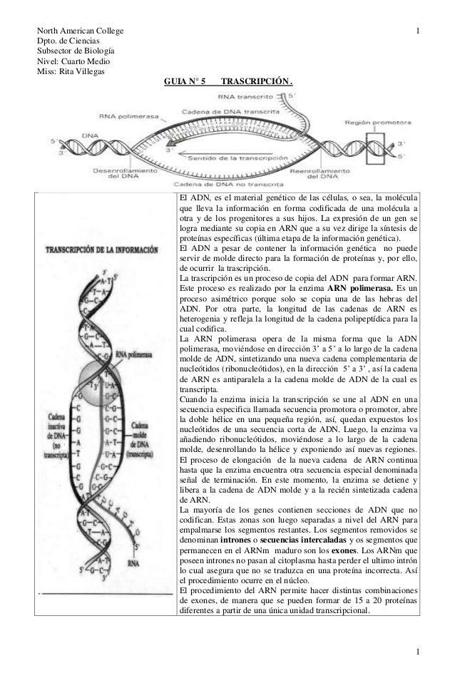North American CollegeDpto. de CienciasSubsector de BiologíaNivel: Cuarto MedioMiss: Rita Villegas11GUIA N° 5 TRASCRIPCIÓN...