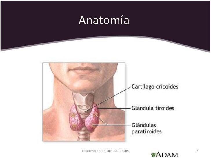 Anatomía  Trastorno de la Glandula Tiroides