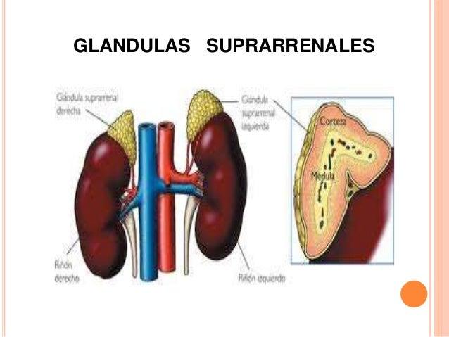 Trastornos de las glandulas suprarrenales