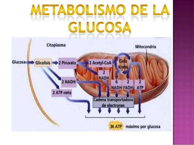 Está usted Acelerar metabolismo el camino correcto Estos diez consejos te ayudarán a responder
