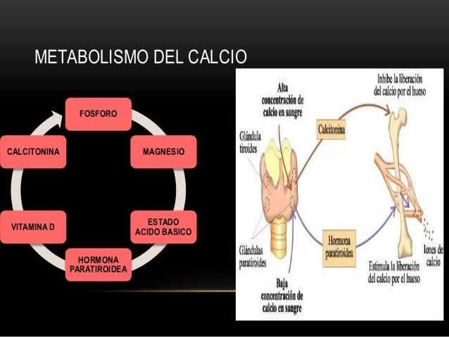 Trastornos del metabolismo del calcio y magnesio en el neonato