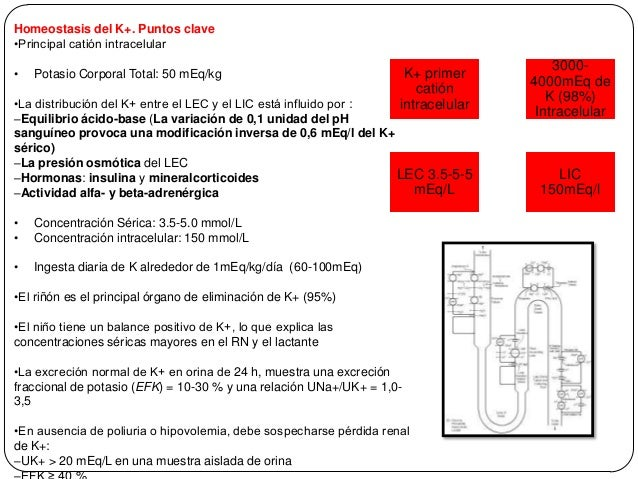 Trastornos del Potasio Hipokalemia Hiperkalemia Slide 3