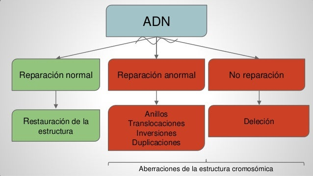 comparison of adn and bsn rn To bsn or not to bsn - that is the nurse's question between an adn and bsn is the emphasis on degrees and programs including lpn to rn/bsn, rn.