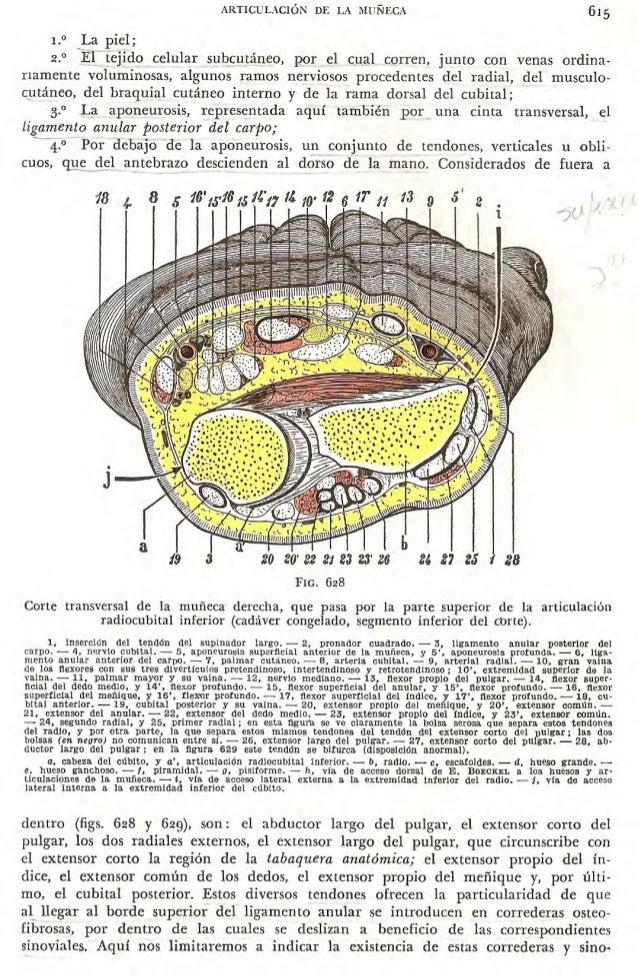 Tratado de anatomia humana - testut - tomo 1