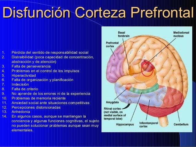 Disfunción Corteza Prefrontal 1. 2. 3. 4. 5. 6. 7. 8. 9. 10. 11. 12. 13. 14.  Pérdida del sentido de responsabilidad socia...