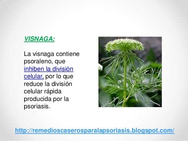 VISNAGA:La visnaga contienepsoraleno, queinhiben la divisióncelular, por lo quereduce la divisióncelular rápidaproducida p...