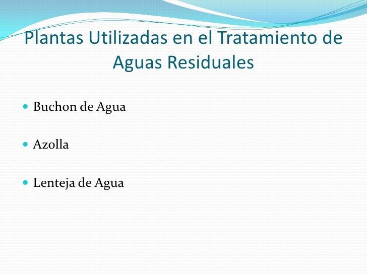 Plantas Utilizadas en el Tratamiento de Aguas Residuales<br />Buchon de Agua<br />Azolla <br />Lenteja de Agua<br />