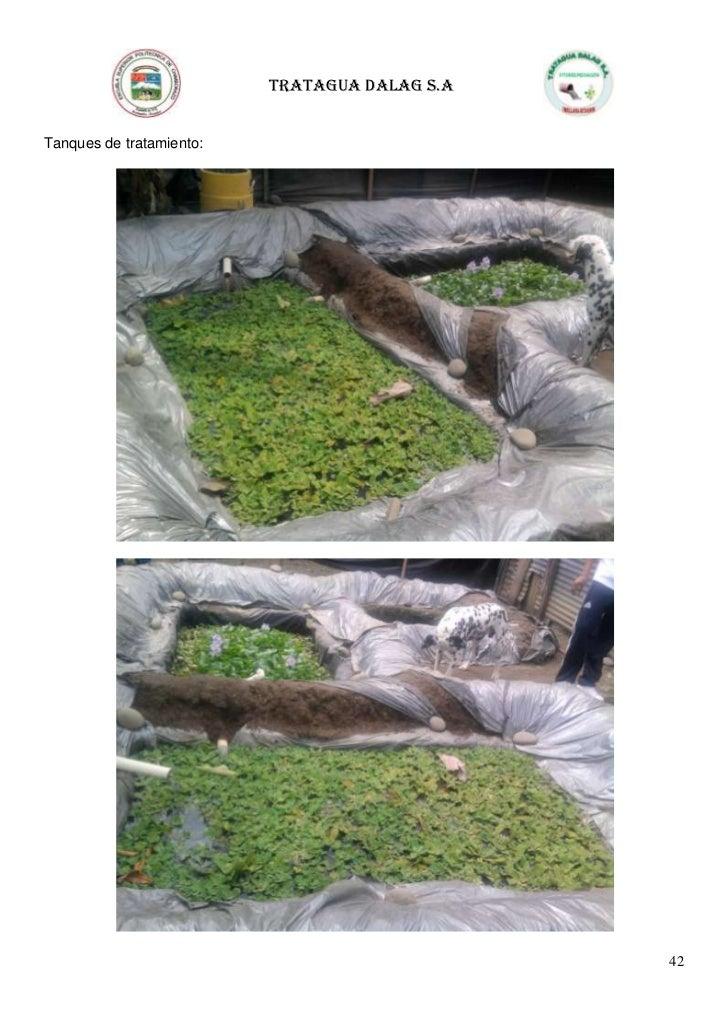 Tratamiento de aguas residuales fitorremediacion - Tratamiento de agua ...
