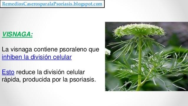 VISNAGA: La visnaga contiene psoraleno que inhiben la división celular Esto reduce la división celular rápida, producida p...