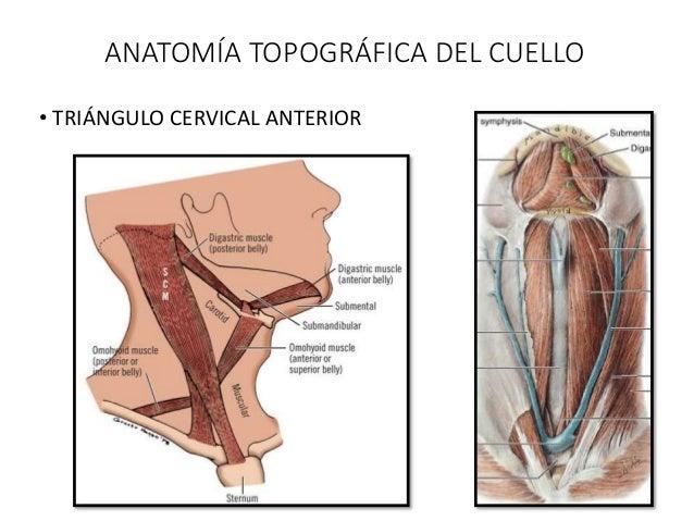 Trauma cervical 2016