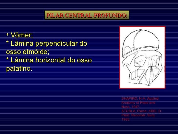 PILAR CENTRAL PROFUNDO: SHAPIRO, H.H. Applied Anatomy of Head and Neck, 1947. STURLA, Flávio; ABSI, D. Plast. Reconstr. Su...