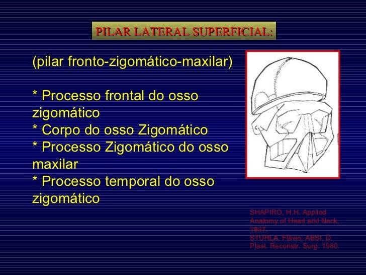 PILAR LATERAL SUPERFICIAL: SHAPIRO, H.H. Applied Anatomy of Head and Neck, 1947. STURLA, Flávio; ABSI, D. Plast. Reconstr....