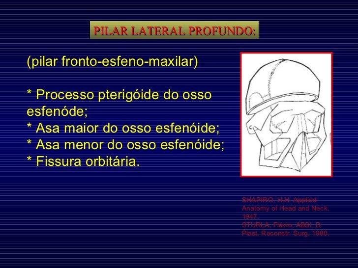 PILAR LATERAL PROFUNDO: SHAPIRO, H.H. Applied Anatomy of Head and Neck, 1947. STURLA, Flávio; ABSI, D. Plast. Reconstr. Su...