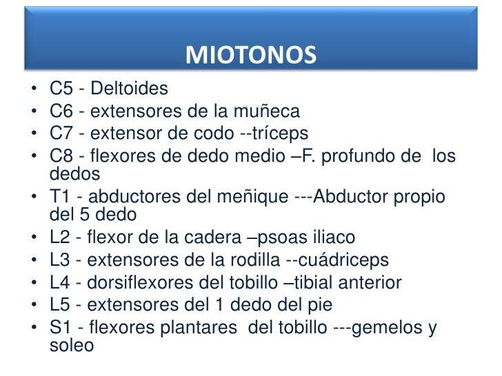 MIOTONOS•   C5 - Deltoides•   C6 - extensores de la muñeca•   C7 - extensor de codo --tríceps•   C8 - flexores de dedo med...