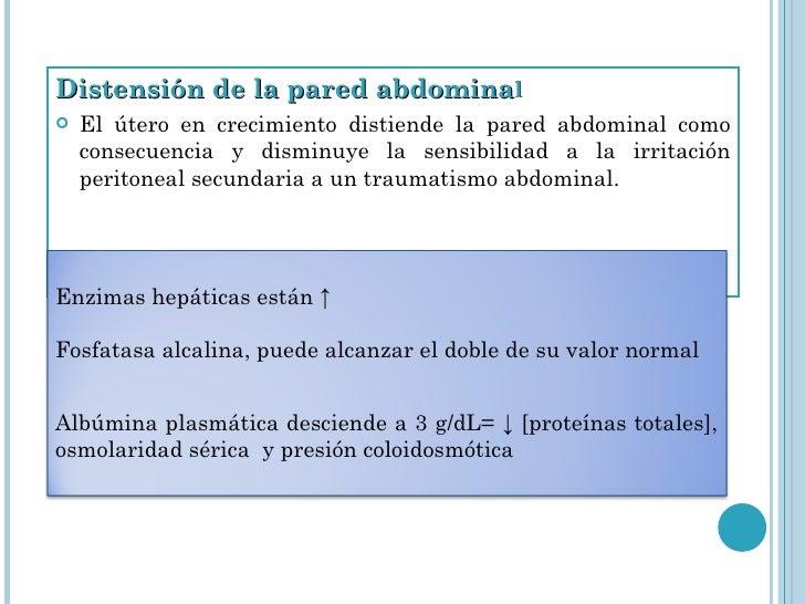 <ul><li>Distensión de la pared abdomina l </li></ul><ul><li>El útero en crecimiento distiende la pared abdominal como cons...