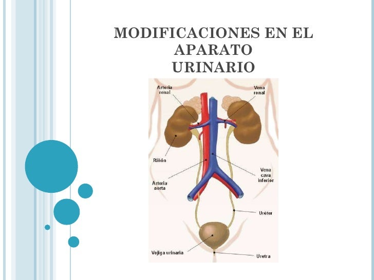 MODIFICACIONES EN EL APARATO URINARIO