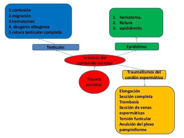 Trauma escrotal: Lesiones del contenido escrotal 1.contusión 2.migración 3.hematomas 4. desgarro albuginea 5.rotura testic...