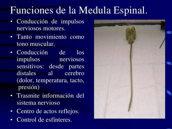 Traumatismo de columna vertebral y medula espinal