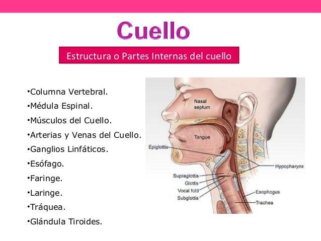 Los dolores en los riñones y la ausencia de la menstruación