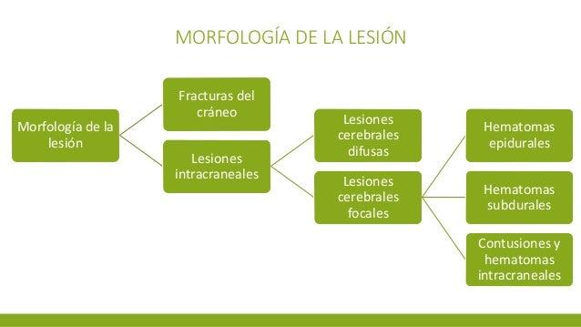 MORFOLOGÍA DE LA LESIÓN Morfología de la lesión Fracturas del cráneo Lesiones intracraneales Lesiones cerebrales difusas L...