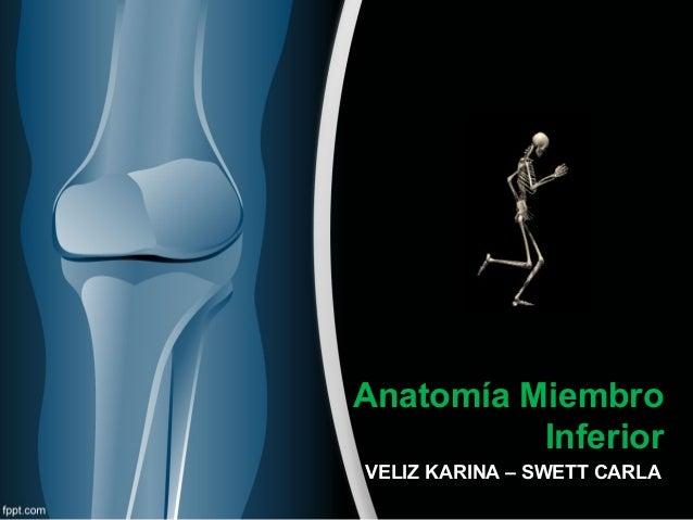 Anatomía de cadera y muslo.