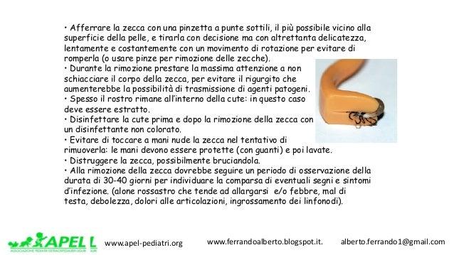 www.apel-pediatri.org www.ferrandoalberto.blogspot.it.alberto.ferrando1@gmail.com • Afferrare la zecca con una pi...