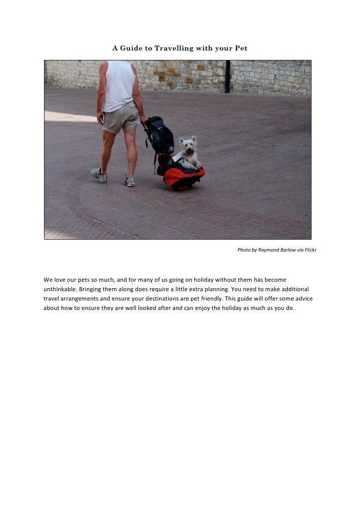 A Guide to Travelling with your Pet                                                                        Photo by Raymon...