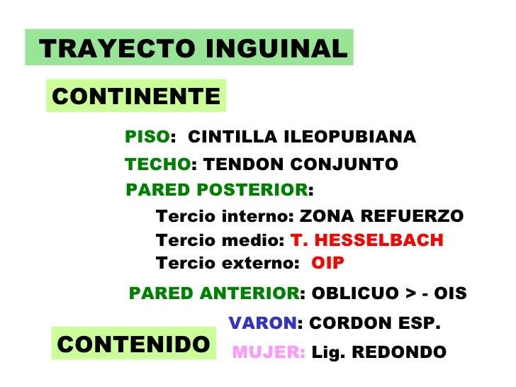 Trayecto inguinal 2 - Continente y contenido ...