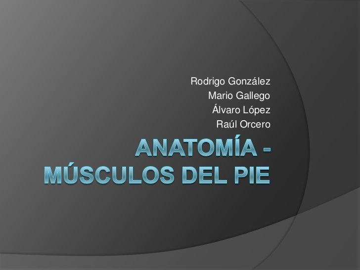 Anatomía - Músculos del Pie<br />Rodrigo González<br />Mario Gallego<br />Álvaro López<br />Raúl Orcero<br />