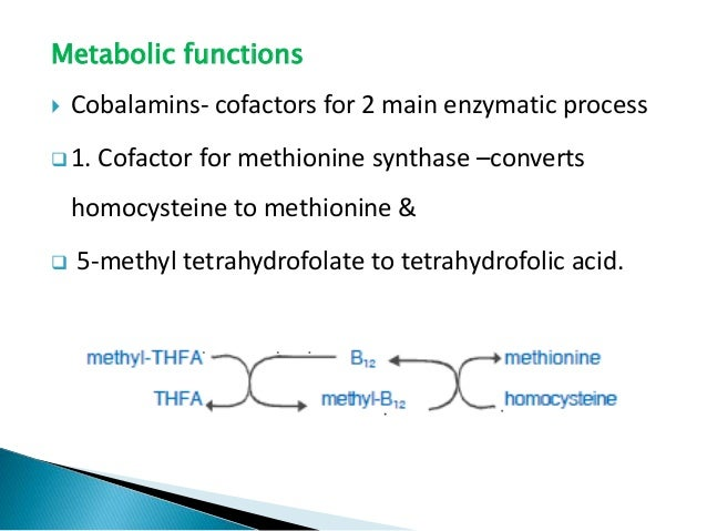 Metabolic functions  Cobalamins- cofactors for 2 main enzymatic process  1. Cofactor for methionine synthase –converts h...