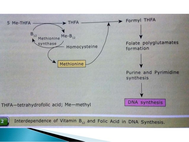 In vitB₁₂ deficiency  5-methyl-tertrahydrofollic acid gets trapped.  Defective DNA synthesis & ultimately megaloblastic ...