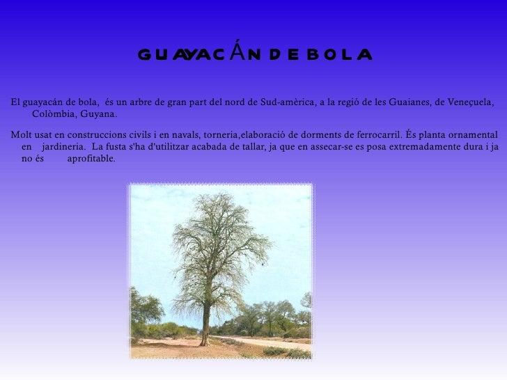 ASTRONIUM LECOINTEI És natiu de Bolívia, Brasil, Equador, Surinam, Veneçuela i del Perú. Perconstruccionscivilspesades,...