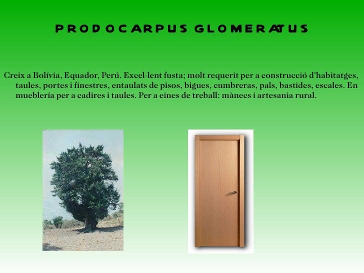 LUEHEA DIVARICATA AquestarbreespottrobaraBrasil,Paraguai,Uruguai, Argentina. Seveix  per a estructurade mobles,h...