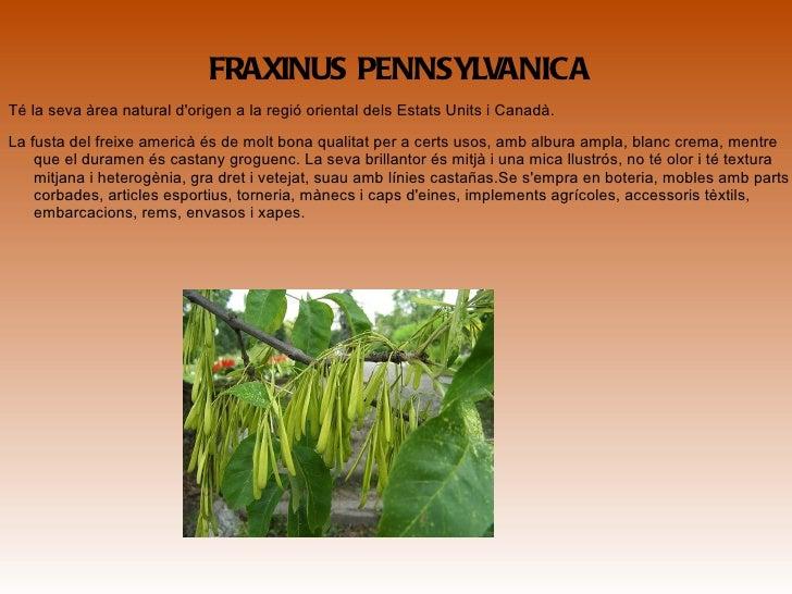 <ul>FRAXINUS NIGRA És una arbre natiu de l'est de Canadà i nord-est dels Estats Units, des de l'oest de l'illa de Terranov...