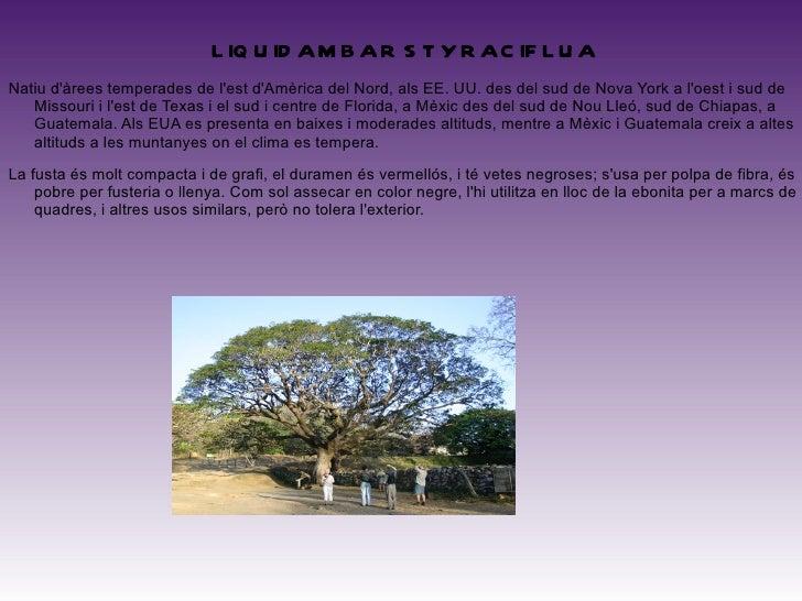 <ul>FRAXINUS PENNSYLVANICA Té la seva àrea natural d'origen a la regió oriental dels Estats Units i Canadà. La fusta del f...