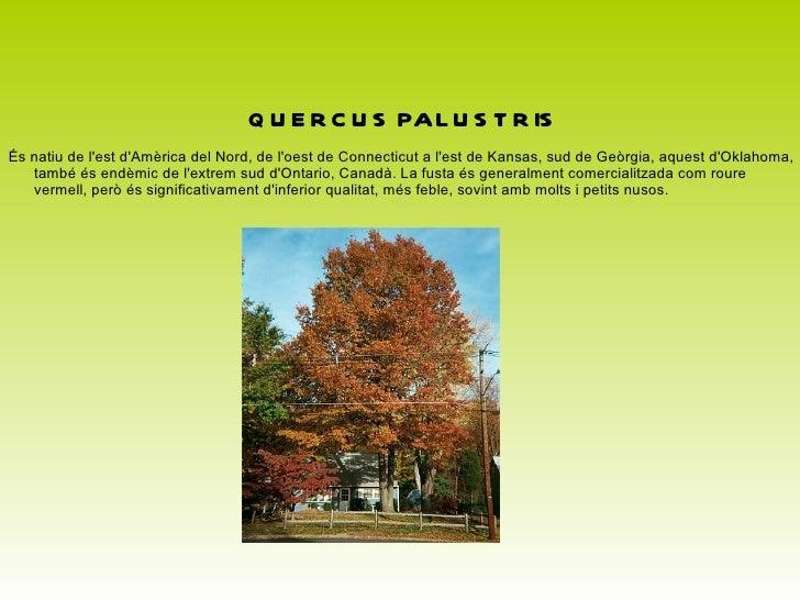 <ul>QUERCUS ELLIPSOIDALIS És originària de Norteamérica.El roure de Hill ocasionalment és plantat com un arbre ornamental,...