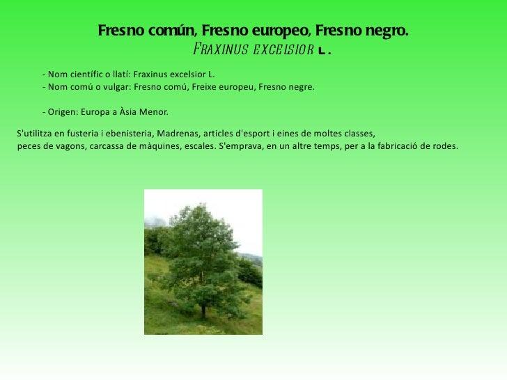 <ul>Chamaerops humilis Chamaerops humilis, anomenat margalló o palmitera, és l'única planta nativa d'Europa de la família ...